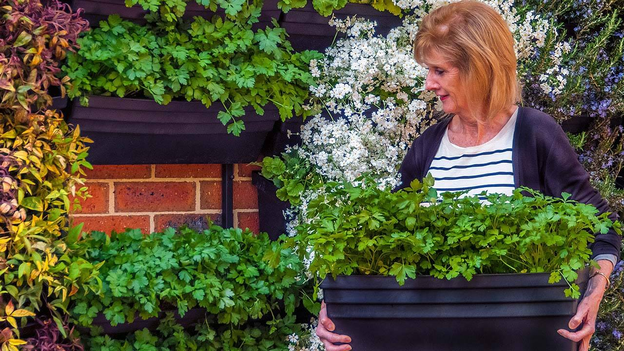 Our Modular Vertical Garden System Will Grow Anything That You Could In A  Normal Planter Box. Organic Herbs And Vegetables, Thrive In Our Living  Walls.