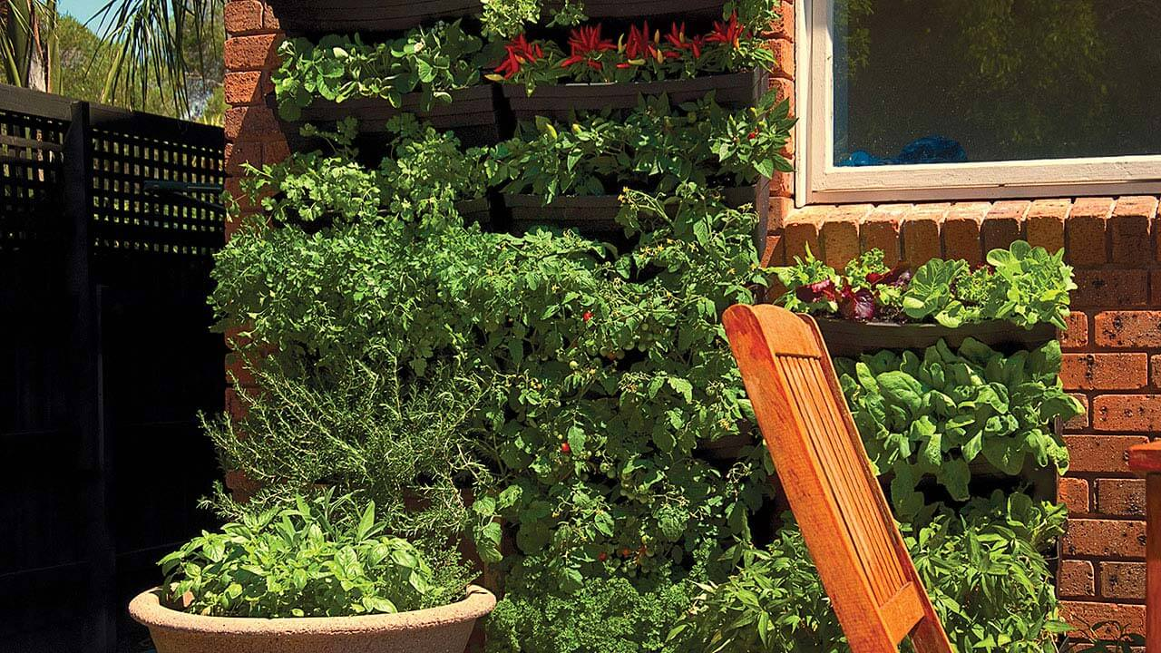 A green wall of vegetables and herbs.